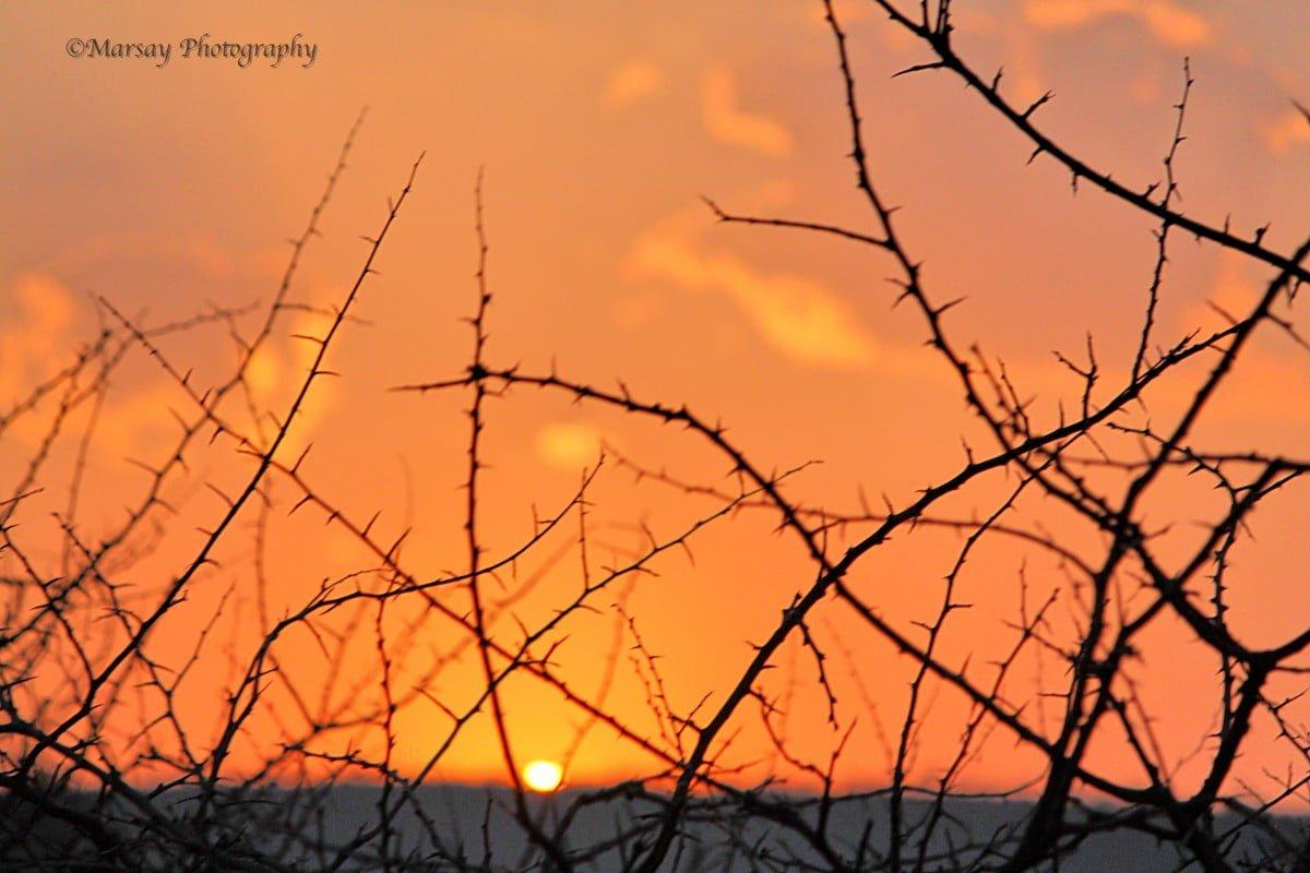 thorny-silhouette-sunrise-1200x800.jpg