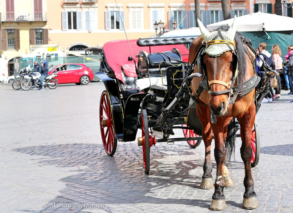 Horse drawn carriages found at the bottom of the Spanish steps, I love the 'Gladiator' look this Horse had on.