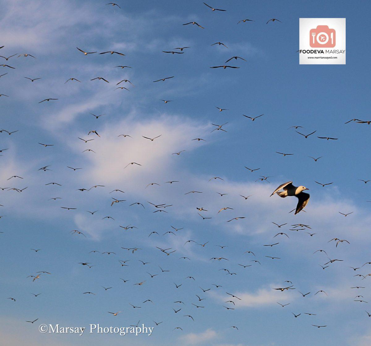 cape-birds-for-blog-1200x1120.jpg